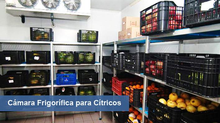 Camara frigorifica para citricos